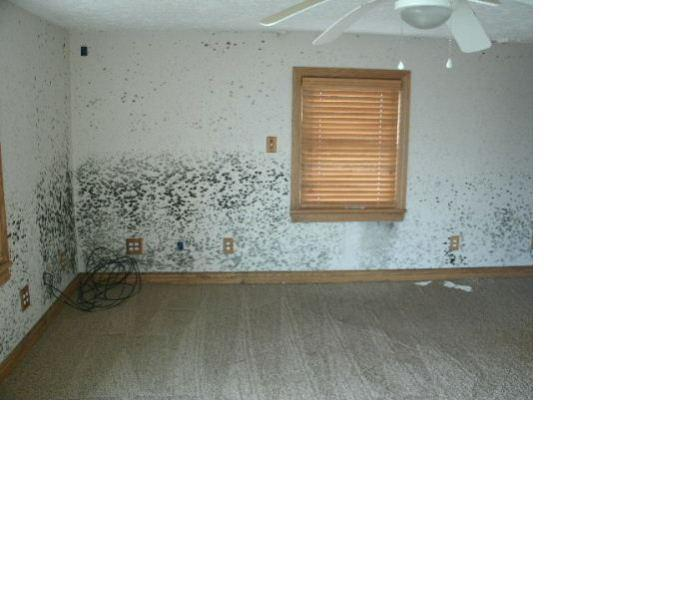 Mold Remediation Before